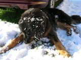 První sníh doma